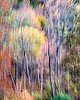 -trees-141019-8816-2.jpg
