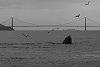 -humpback.jpg