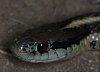 -snake-eye.jpg