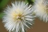 -fluffy-small.jpg
