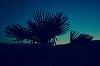 -palm_tree.jpg