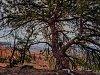 -brycetrees-14.jpg
