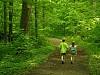-walk-woods3.jpg