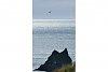 -seagull-ecola-park-cannon-beach-..jpg