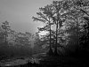 -cypresspreservebw1.jpg