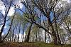 -springtime-trees-glen-roy.jpg