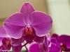 -pru-orchids-3692.jpg