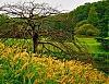 -treeandgrass.jpg