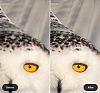 -owl-before-after-1-.png