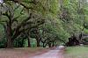 Lovely Live Oaks
