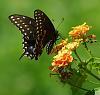 DA 55-300mm Meets a Butterfly