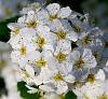 ?? flower.....