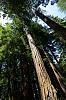 California's Muir Woods National Park