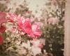 Beautiful Pink Flowers - vintage style