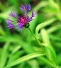 Rochester Lilac Festifal