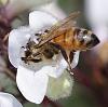 nectar mining........