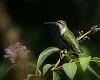 Hummingbirds...Nature's Miniature Masterpieces