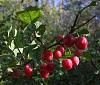 Photo of the Week - Prunus