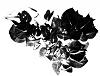 Bouganvillea in Black and White