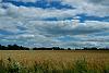 Fingerlakes Wheat Field