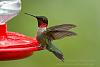 Hummingbird with full wing extension detail @ 600mm, 1/250 sec.