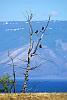 Lake Baikal, Olkhon Island, Birds
