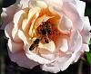 Best Pollen Restaurant