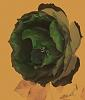 Abstract Rose in Green.