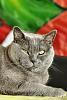 My Cat Nouchka
