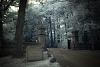 Edgell Grove Cemetery Framingham, MA (680nm IR Filter)