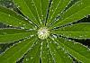 999 Rain Droplets