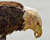 Eagle @ Feed - 2