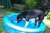 Dog loves his pool