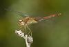 Damselfly (2 images)