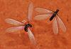 Flying Ants............