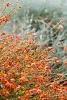 Kings Park Wildflower September