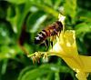 A Landing Bee