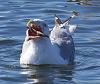 seagull brunch......