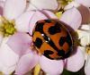 Ladybird in flowers