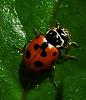 Ladybird on the move