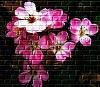 Floral Grafitti Wall