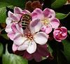 Rummaging Bee