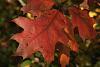 Fall Colour, Minnehaha Falls