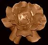 A Copper Rose