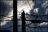 Pole Dweller