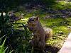 Arboretum ....some animals