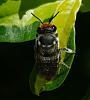 Our Queen Bee Julia???????????????