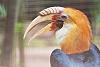 Birds at Ragunan Zoo, Jakarta