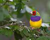 Colorfull bird from Florida