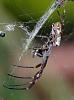 Silky Web
